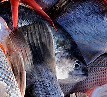 Fish Mayhem by Liv Stockley