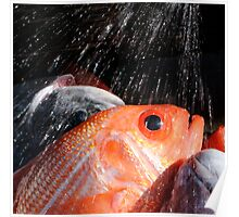 Fishy shower Poster