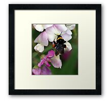 Bee Diner Framed Print