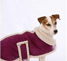 A New Winter Coat..... Photographic Print