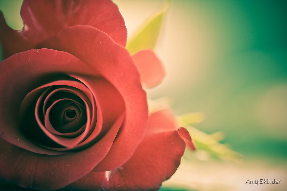 Rose by Amy Skinder