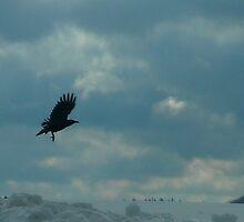 Raven by Rebecca Bryson