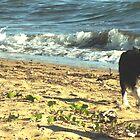 Beach Walking Pialba, Qld Australia by sandysartstudio