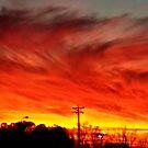 Sunset Swirls by Lisa Taylor