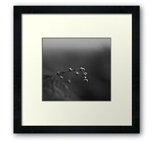 Time to view the world Framed Print