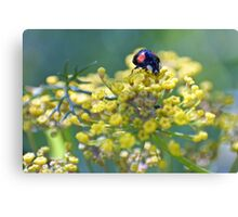 Sourcing the sweetest fennel Canvas Print