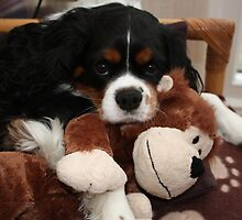 Charlie Girl Relaxing with her Monkey by AnnDixon