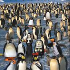 My Penguin Collection Escaped to Antarctica by Donna Catanzaro