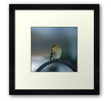 Winter Plumage Framed Print