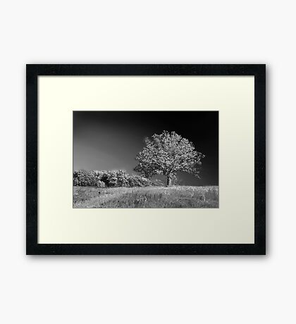 A grand old tree Framed Print