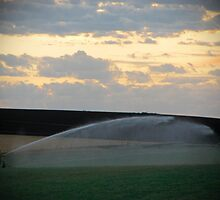 Irrigation at Sunset by Judy O'Neil