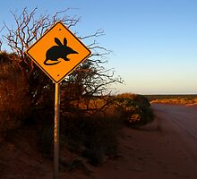 """Bilbies Crossing"" Francois Peron National Park, Western Australia by wildimagenation"