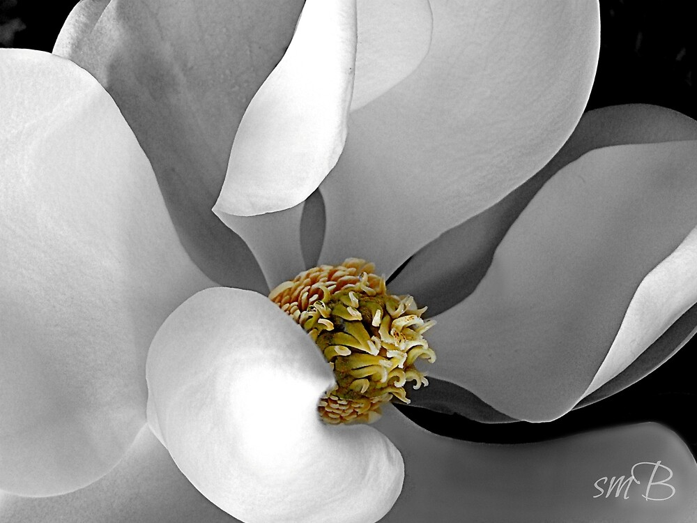 Inner Magnolia by Susan Bergstrom