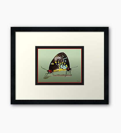 siamese butterfly Framed Print