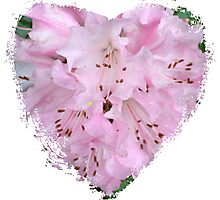 Spring - Pink Flower II - Heart Photographic Print