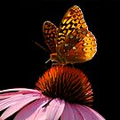 Fritillary Friend by Lois  Bryan