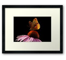 Fritillary Friend Framed Print