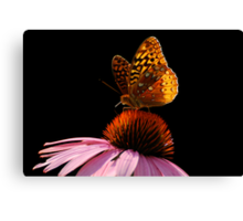 Fritillary Friend Canvas Print