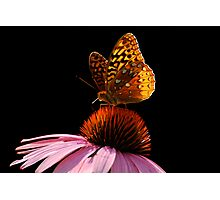 Fritillary Friend Photographic Print