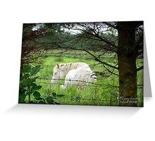 Connemara Pony Greeting Card