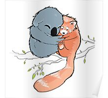 Red Panda + Koala Bear Cuddles Poster
