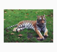 Tiger at Animal Kingdom, FL Kids Clothes