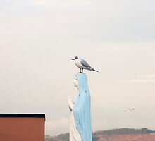 virgin Mary statue with a seagull by morrbyte