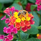 Busy Bee by justbyjulie