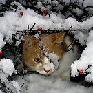 Oh, what a joy! by Mojca Savicki