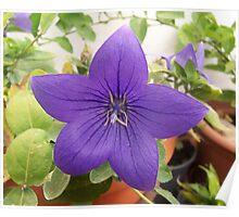 Twinkle Twinkle Purple Star Poster