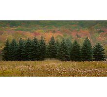 Conifers All In A Row Photographic Print