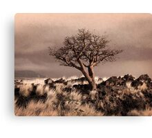 Tree at Dusk in Waikoloa Canvas Print