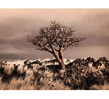Tree at Dusk in Waikoloa Photographic Print