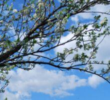 Spring Tree Blossoms Sticker