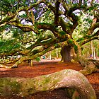 Angel Oak by Wendy Mogul