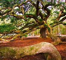 Angel Oak by AngelPhotozzz