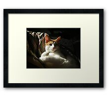 Loki 1 Framed Print
