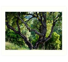 cork Oak Art Print