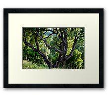 cork Oak Framed Print