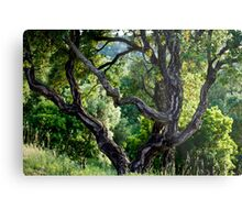 cork Oak Metal Print