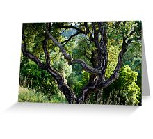 cork Oak Greeting Card