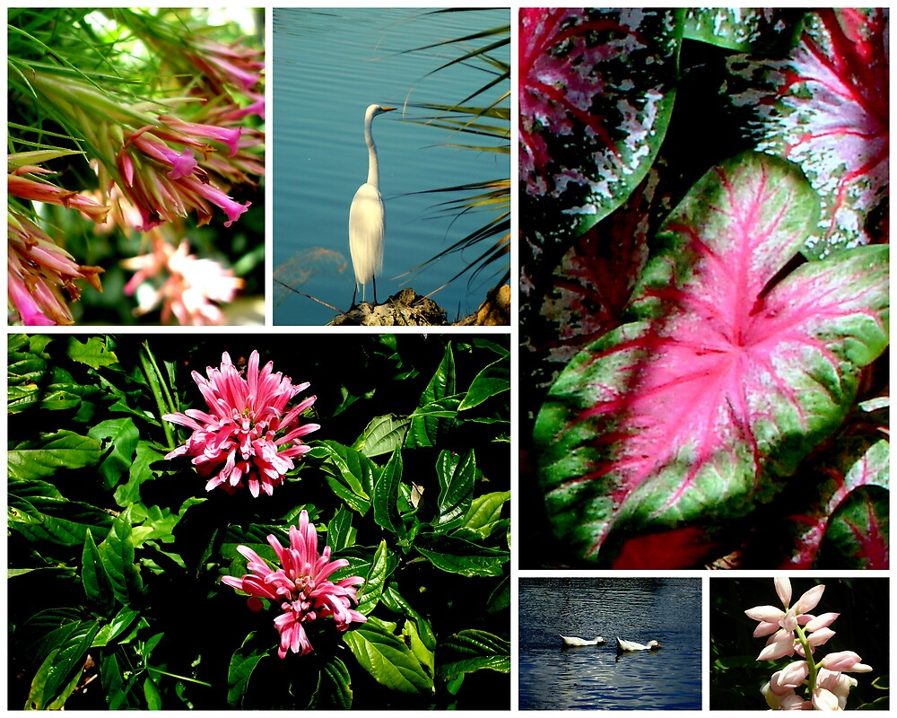 Florida Montage..  by Isa Rodriguez