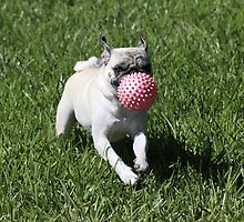 Dog and Ball by franceslewis