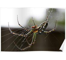 Silver Orb Spider - Leucauge dromedaria Poster