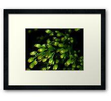 Greenery in Macro Framed Print