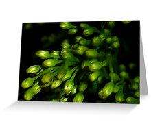 Greenery in Macro Greeting Card