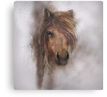 Horse equine animals,wildlife,wildlife art,nature Canvas Print