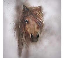 Horse equine animals,wildlife,wildlife art,nature Photographic Print