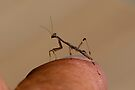Praying Mantis attack by Normf
