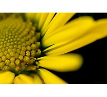 Melo Yellow Photographic Print